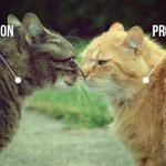 social vs search promotion: what delivers?